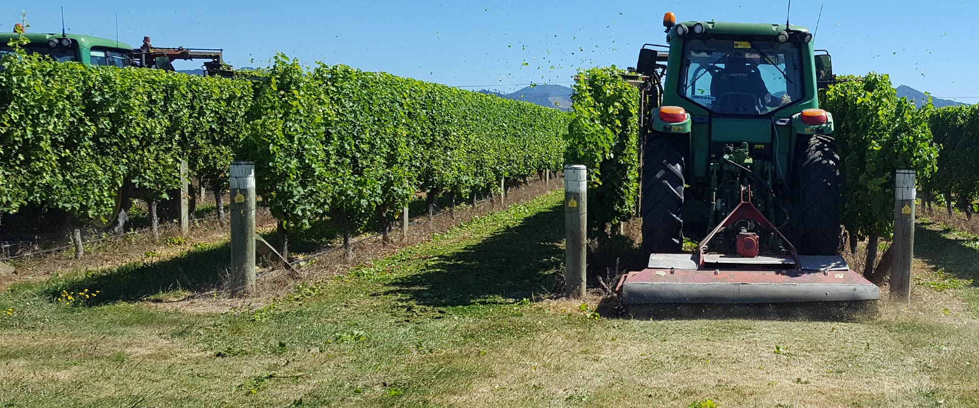 Vineyard Services